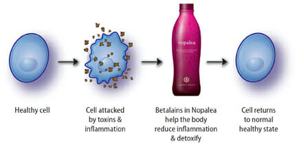 Reduce Inflammation with Nopalea