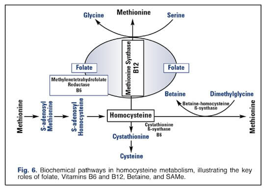 Causes of Homocysteine Elevation
